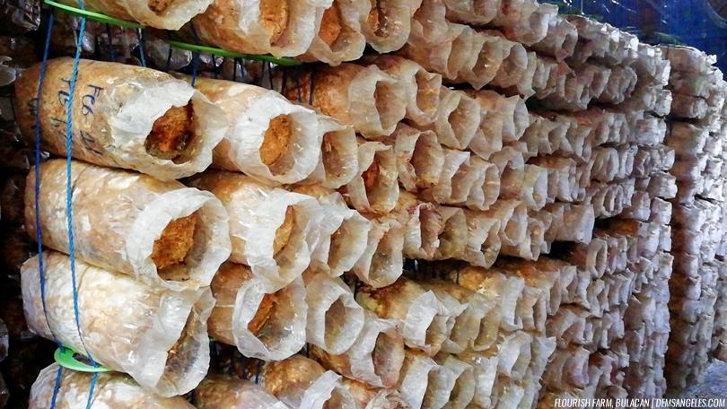 Flourish Farm Bulacan Oyster Mushroom production